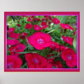 Póster - Las Flores Rojas Print