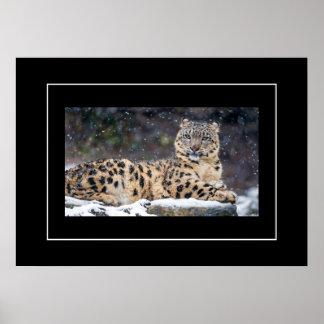 Poster-Leopard