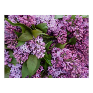 POSTER - Lilacs in Spring- France