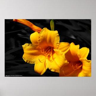 Poster Lilies - Cape Fear, North Carolina -...