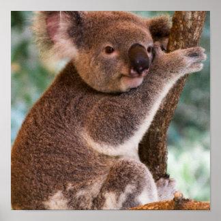 Poster lindo de la koala