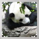 Poster lindo de la panda