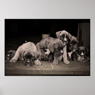 Poster lindo de los perritos del boxeador