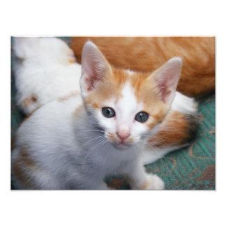 Poster lindo del gatito del naranja y del blanco fotografía