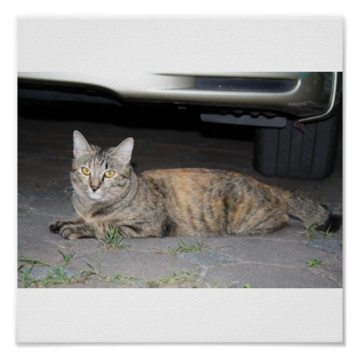 Poster lindo del gato de Tabby