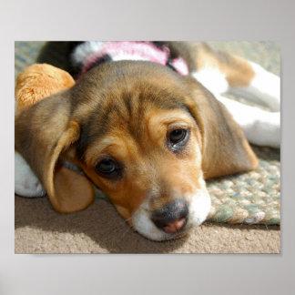 Poster lindo del perrito del beagle