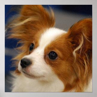Poster lindo del perro de Papillon