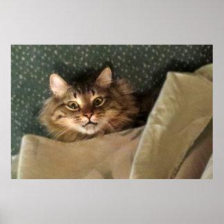 Poster loco del gato