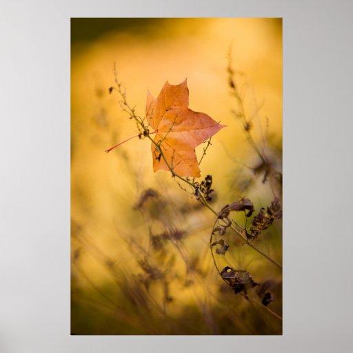 Poster/lona de la hoja del otoño