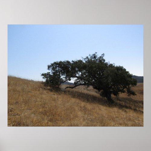 Poster: Lone Oak on San Luis Obispo Hillside Poster