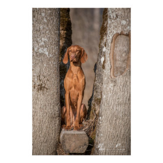 Poster Magyar Vizsla different sizes!!