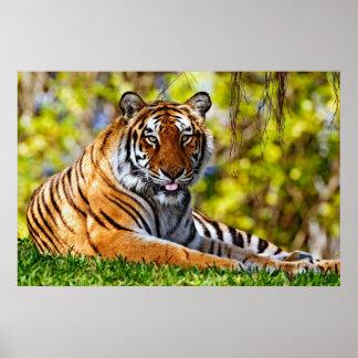 Poster majestuoso del tigre