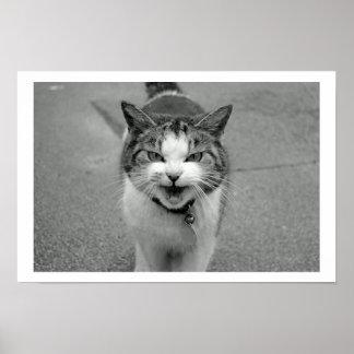 Poster malhumorado del gato