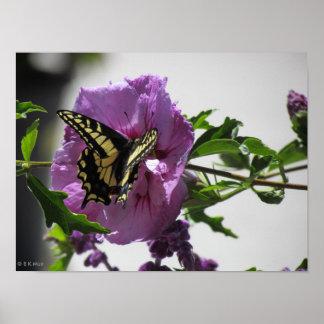 Poster - mariposa de Swallowtail