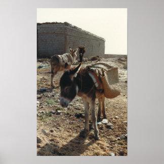 Poster marroquí de la mula
