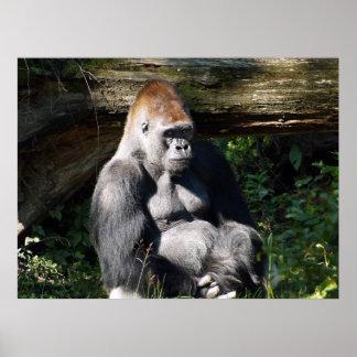 Poster masculino del gorila de la Plata-detrás