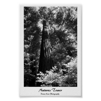 Poster Natures Tower