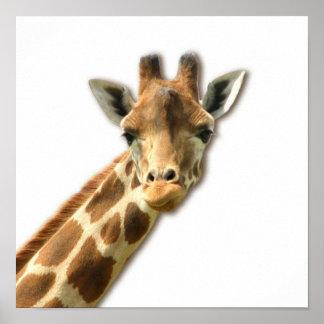 Poster Necked largo de la jirafa