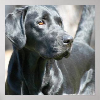 Poster negro alerta del perro del labrador retriev