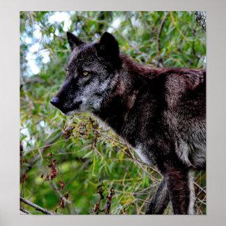 Poster negro del lobo