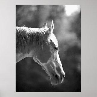 Poster negro y blanco de la impresión del caballo