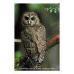 Poster /  Northern Spotted Owl