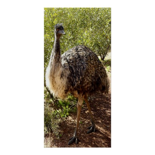 Poster Nosy del Emu Póster