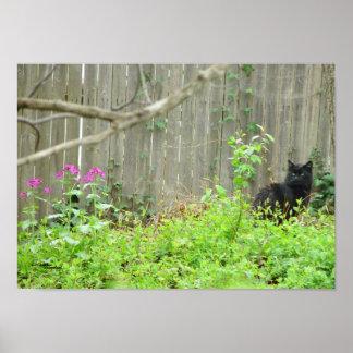 Poster o impresión del gato del bosque