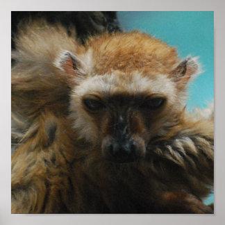 Poster observado azul del Lemur