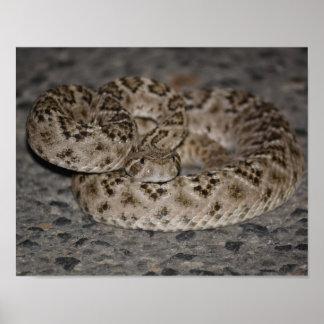 Poster occidental de la serpiente de cascabel de D