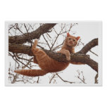 Poster of a cat about to fall off of a tree
