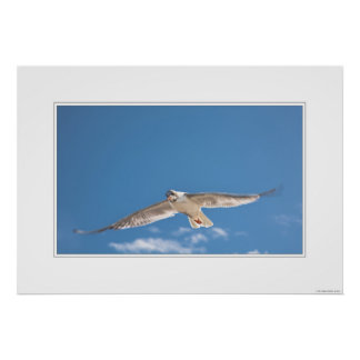 Poster of a flying bird - feel the freedom posters
