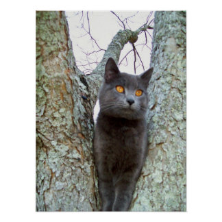 Poster of cat in a pecan tree.