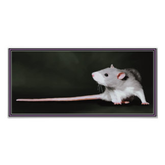 Poster of Cute Rat painting