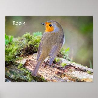 Poster of European Robin on log