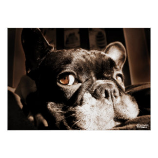 Poster of French Bulldogge by Bullylicious