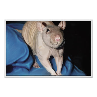 Poster of Hairless Rat