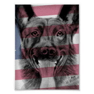 Poster of K9 Dutch Shepherd original artwork
