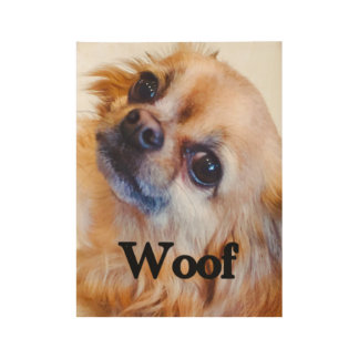 "Poster of long-haired chihuahua face ""WOOF"""