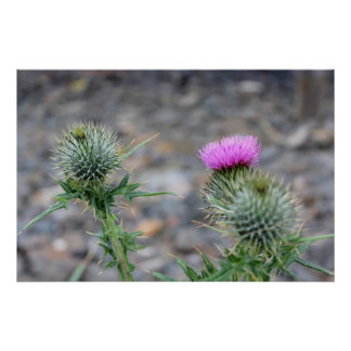 poster of thistles on a beach