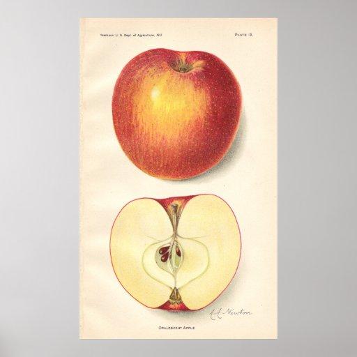Poster opalescente de Apple del vintage