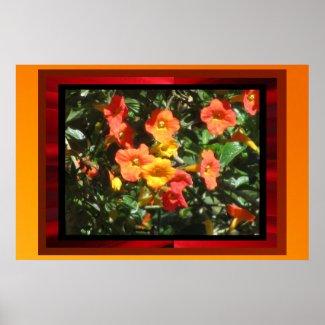 Poster - Orange Flowers