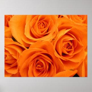 Poster, Orange Roses