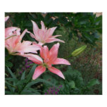 Poster - original colorful pink lilies