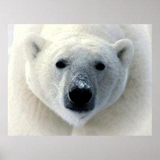 Poster original del arte de la fotografía del oso