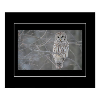 Poster-Owl