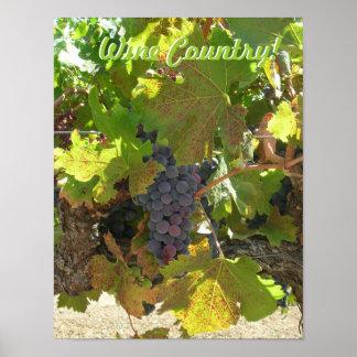 Poster - país vinícola