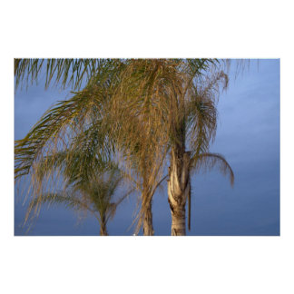 Poster Palm Trees Blowing in the Summer Breeze