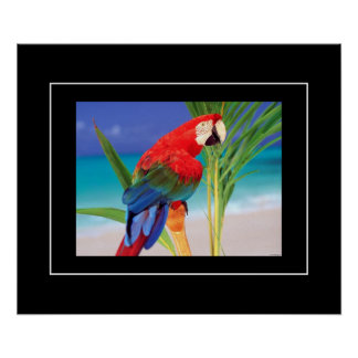 Poster-Parrot