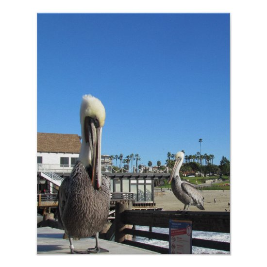Poster - Pelicans on Pier